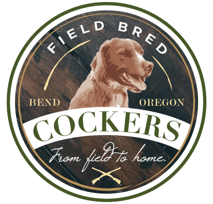 Home - Field Bred Cockers