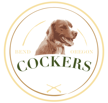 Field Bred Cockers